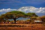 polowania w Afryce